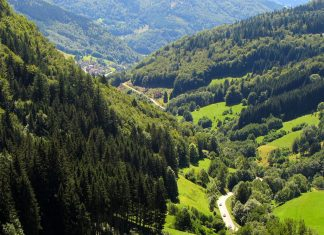 Germany's enchanting black forest, not a cake