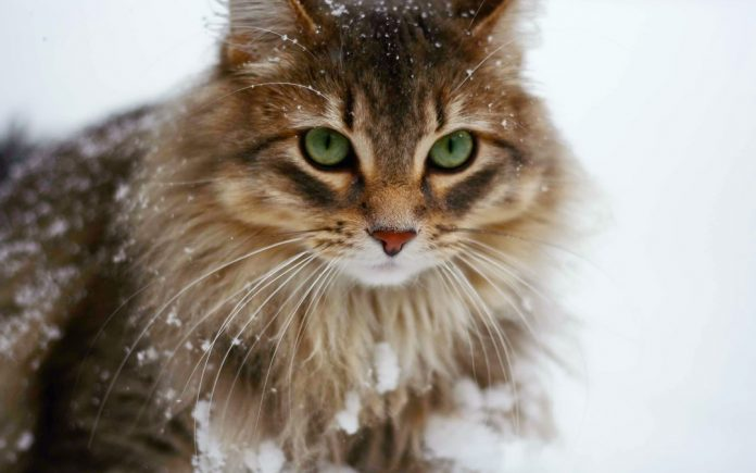 safely take your cat on winter vacation