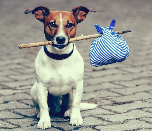 Best tips for travelling with your dog on vacation