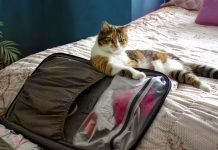 How to choose the perfect travel crate for your pet