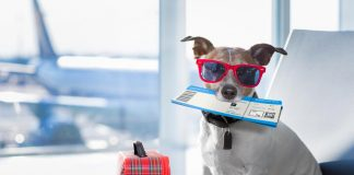 How to safely fly with your dog
