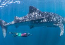 Top snorkeling destinations