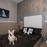 Tips for choosing a hotel when accompanying your dog
