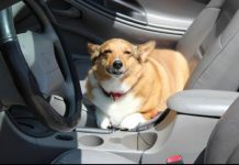 Top tips for a safe ride with your dog