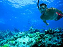 Tips for first time snorkelers
